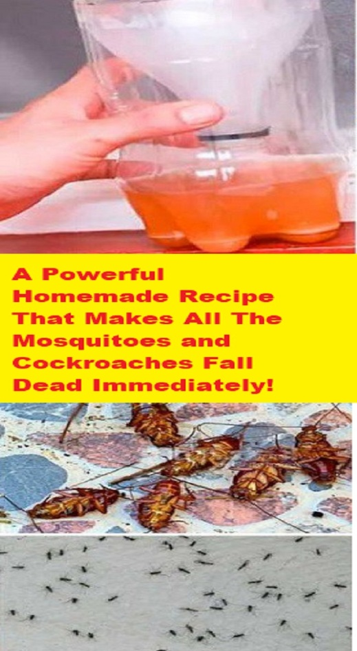 a-powerful-homemade-recipe-that-makes-all-the-mosquitoes-and-cockroaches-fall-dead-immediately